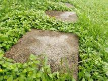 Concrete steenweg in gras stock afbeeldingen
