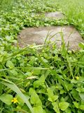 Concrete stepping Stones in grass stock image
