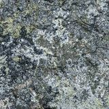 Concrete surface. Abstract generated obsolete weathered aged rough cement concrete background Royalty Free Stock Image