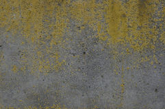 Concrete surface covered with a yellow moss stock image