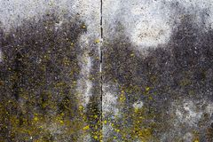 Concrete surface with moss, blocks joint line and rich texture Stock Photography