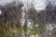 Concrete surface with moss, blocks joint line and rich texture Stock Photos
