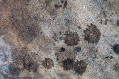 The concrete surface Royalty Free Stock Photography