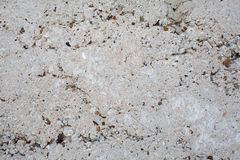 Concrete texture Stock Images