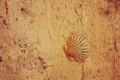 Concrete texture with shell Royalty Free Stock Photo
