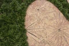 Concrete textuur of achtergrond met bladpatroon Royalty-vrije Stock Afbeeldingen