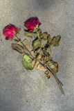 Concrete  tomb with roses Stock Photos