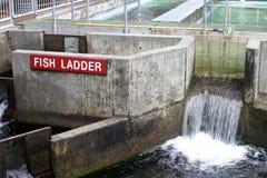 Concrete vissenladder bij zalmlandbouwbedrijf Stock Fotografie