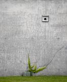 Concrete vs. ivy Stock Photography