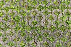 Brick block with small trees inserted. Royalty Free Stock Photo