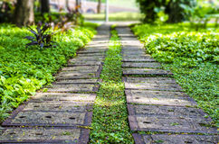 Concrete walkway in the park Stock Images
