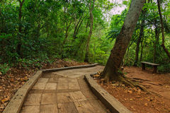 Concrete walkway on a wild journey. To the waterfall Erawan, Thailand Stock Images