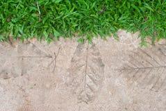 Concrete walkways print leaves , on lawn Stock Photo