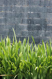 Concrete wall. With green plants Stock Images