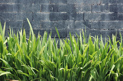 Concrete wall. With green plants Royalty Free Stock Images