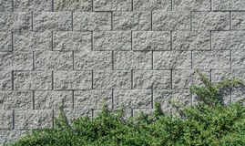 Concrete wall with branches. Beautiful texture from concrete blocks with decorative green plant royalty free stock photo