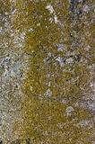 Concrete wall covered with moss Stock Image