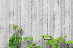 Concrete wall with creeper plants Royalty Free Stock Images