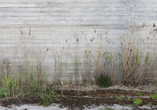 Concrete wall and grass which grows before it Stock Photography