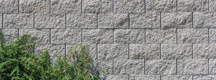 Concrete wall with green branches. Beautiful wide-angle texture from concrete blocks with decorative green plant stock photo