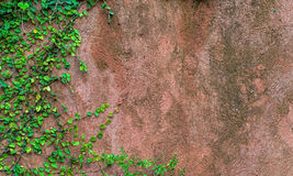 Concrete wall with green grass Stock Photography