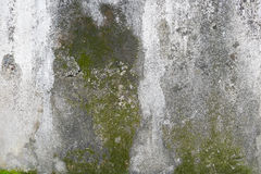 Concrete wall with grunge texture and moss green algae Royalty Free Stock Photography