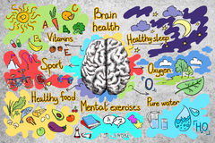 Concrete wall with healthy brain sketch. Concrete wall with creative colorful healthy brainstorm sketch. Food for brain concept Stock Images