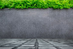 Concrete wall or marble wall and concrete floor with ornamental plants or ivy or garden tree. stock photos