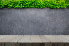 Concrete wall or marble wall and wooden floor with ornamental plants or ivy or garden tree. Stock Images