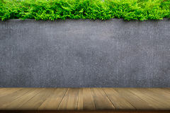 Concrete wall or marble wall and wooden floor with ornamental plants or ivy or garden tree. Royalty Free Stock Images