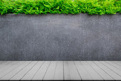 Concrete wall or marble wall and wooden floor with ornamental plants or ivy or garden tree. Stock Photos