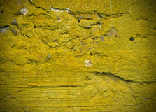 Concrete wall texture with moss stock image