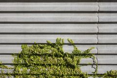 Concrete Wall and Vegetation Stock Photos