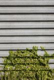 Concrete Wall and Vegetation Royalty Free Stock Images