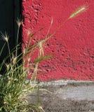 concrete wheat Στοκ εικόνα με δικαίωμα ελεύθερης χρήσης