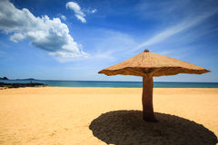 Concreted当在海滩的蘑菇遮阳伞 库存图片