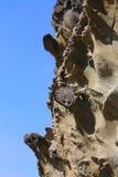 Concreties, het Park van de Staat van Kustacres, Oregon Royalty-vrije Stock Afbeeldingen