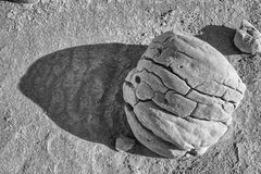 Concretion rocks in desert Anza Borrego State Park. Concretion boulder rocks in desert Anza Borrego State Park royalty free stock photography