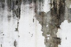 Concreto branco da cor da parede velha Imagem de Stock Royalty Free
