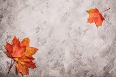 Concreto cinzento com folhas de bordo e vista superior fotos de stock