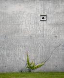 Concreto contra hiedra Fotografía de archivo