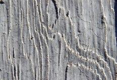 Concreto de madeira Foto de Stock
