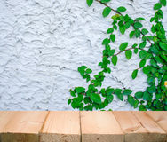 The concretw wall green ivy plant Stock Photography