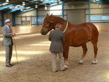 Concurrence lourde de cheval Photographie stock
