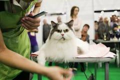Concurrence pour des chats de toilettage Photos stock
