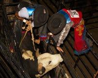 Concurrence professionnelle d'équitation de Taureau Photos libres de droits