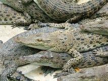 Concurrentie tegen alligators royalty-vrije stock foto's