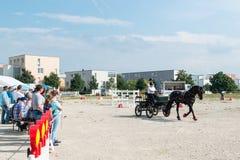 Concurrentie van het paardvervoer Stock Foto's