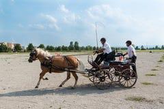 Concurrentie van het paardvervoer Royalty-vrije Stock Foto's
