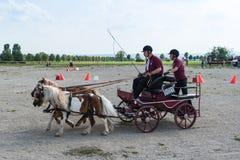 Concurrentie van het paardvervoer Stock Foto